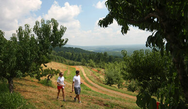 Couple walking through the peach trees at Carter Mountain Orchard