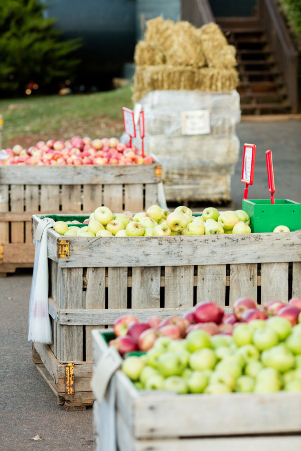 Apple bins at Carter Mountain Orchard