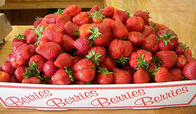 Pick your own strawberries in Crozet Virginia