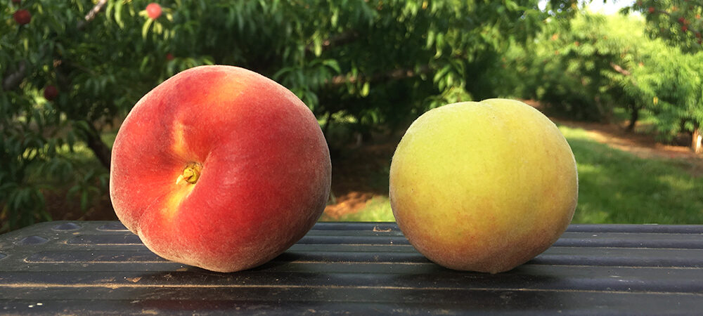 CFO: Pick the Perfect Peach