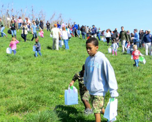 Easter Egg Hunt event on the hill at Carter Mountain Orchard
