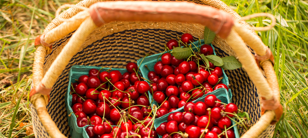 Basket of sweet cherries in Afton VA