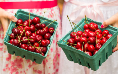 Pick your own sweet cherries at Spring Valley Orchard