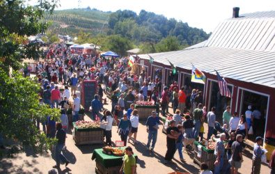 Apple Harvest Celebration at Carter Mountain Orchard