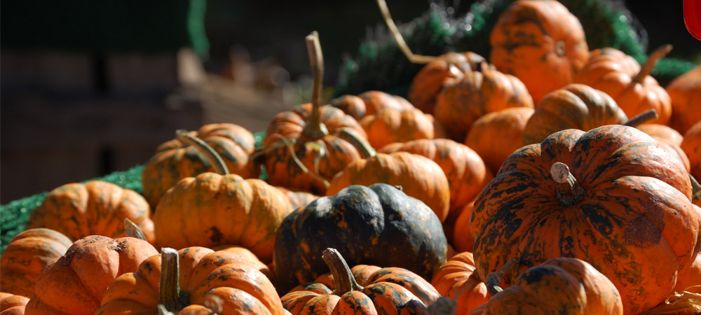 Mini pumpkins available at Chiles and Carter Mountain