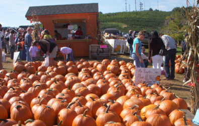 Ready-picked Pumpkin patch at Carter Mountain Orchard