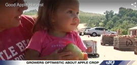Good apple harvest in Charlottesville, video from CBS19 Newsplex