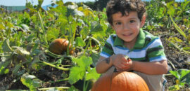 Boy picking pumpkins at Chiles Peach Orchard