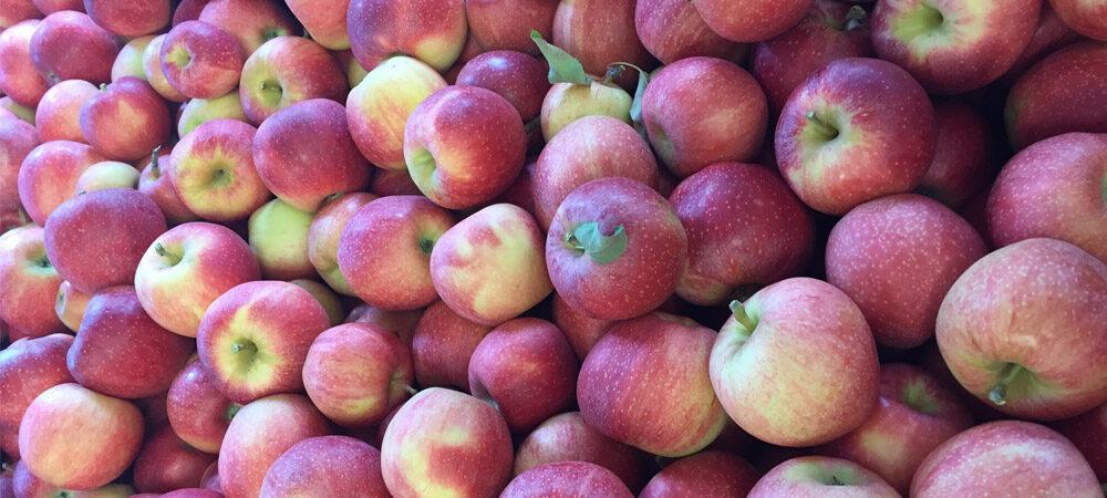 CP: Apple Season