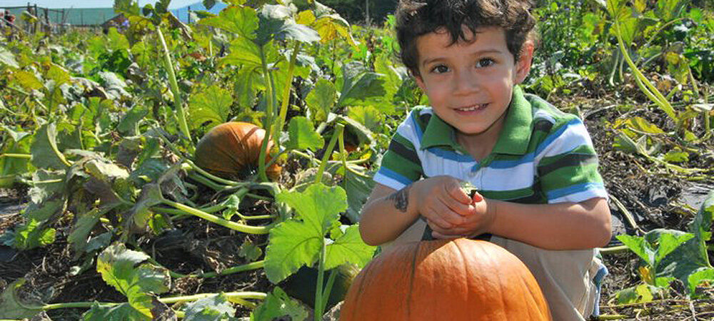 CP: PYO Pumpkins – boy in patch