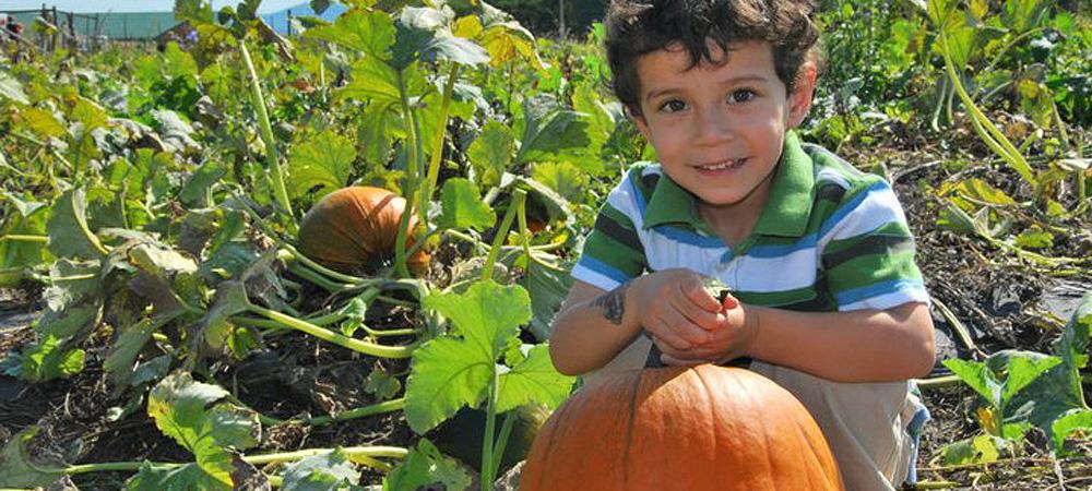 Boy picking pumpkins at Chiles Peach Orchard
