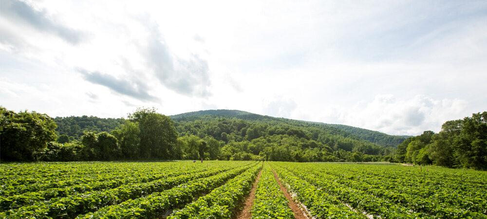 CP: Scenery – Strawberry Field