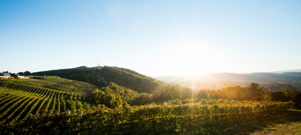 CM-AaronWatson-2015-view-011-vineyard-1000x450