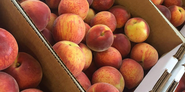 Ready-picked peaches in Crozet