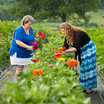 Sarah and Lizzy picking flowers at Chiles Peach Orchard