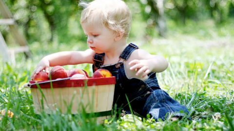 Little boy with basket of peaches
