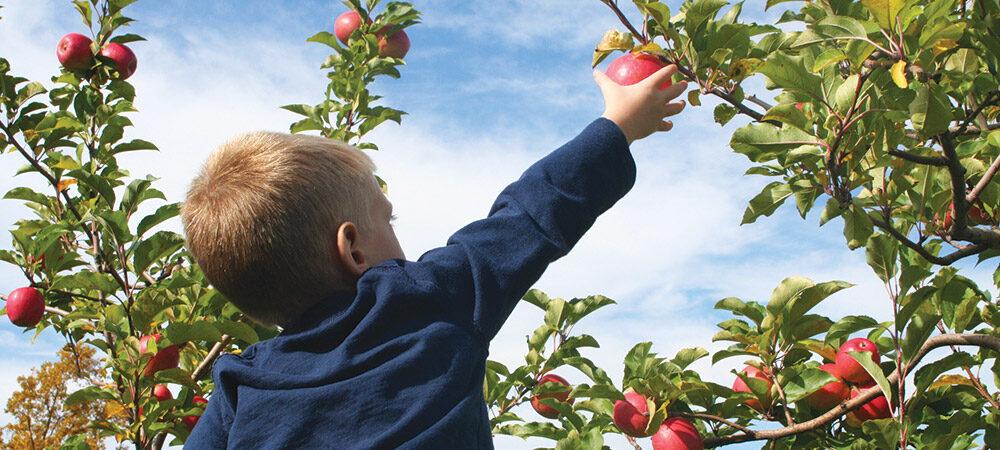 CP: PYO Apples