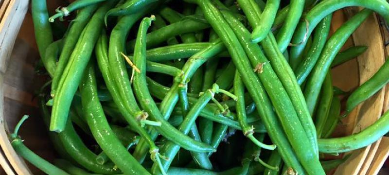 basket of Green Beans