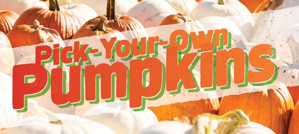 CP: PYO Pumpkins (designed)