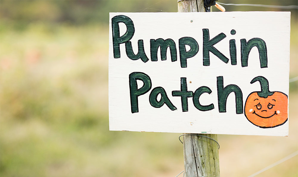 Pumpkin patch at Chiles Peach Orchard