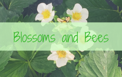 Blossoms and Bees Event