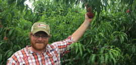 Henry Chiles with the peaches at Chiles Peach Orchard