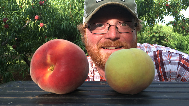 Henry Chiles shows ripe vs unripe peaches