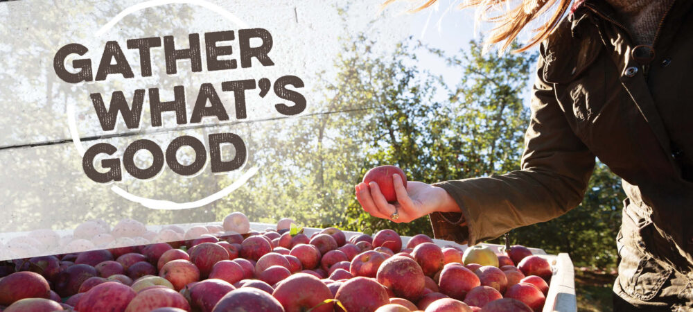 CP: Gather What's Good – Apples
