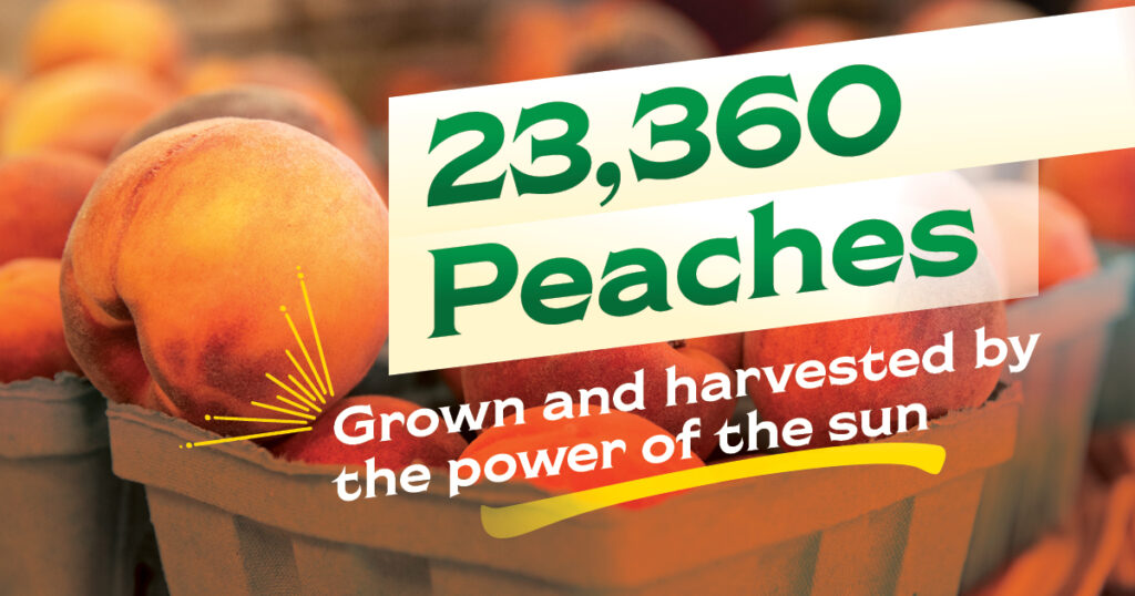 Chiles Family Orchards can produce 23,360 peaches with the power of the sun.