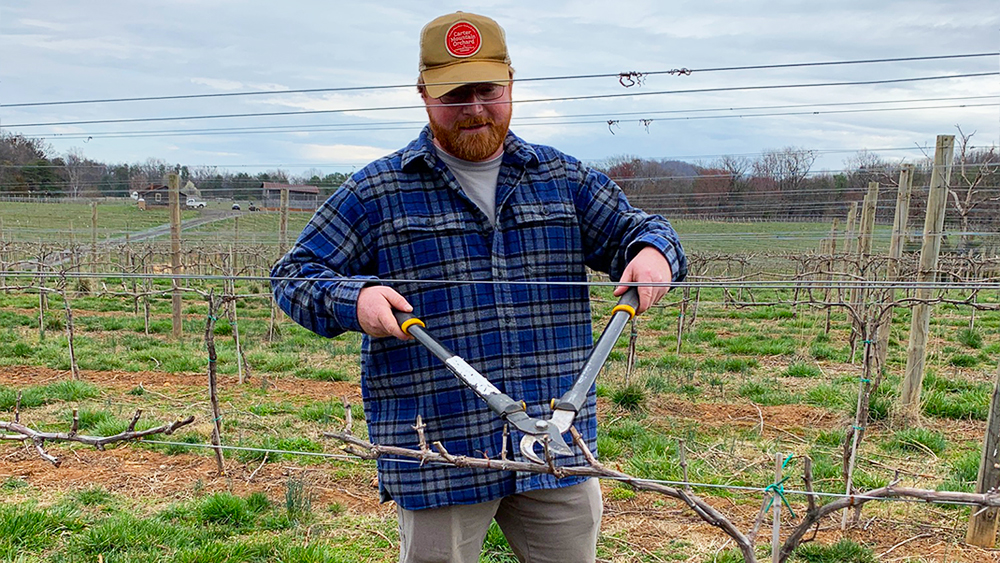 Farmer Henry Chiles pruning grapevines