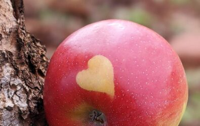 Pink lady apple with natural heart on skin