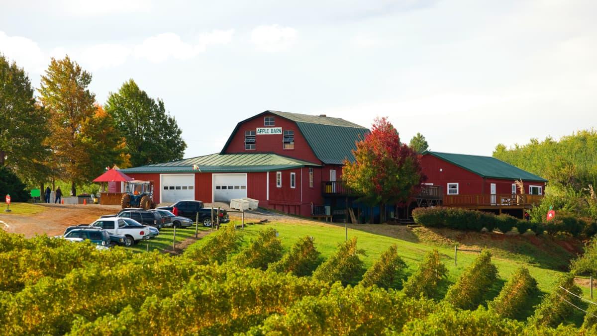 Apple Barn at Carter Mountain Orchard