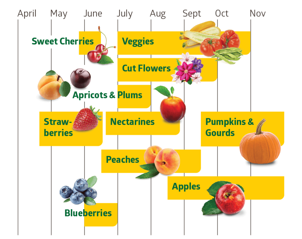 Pre-picked fruit available at Chiles Peach Orchard