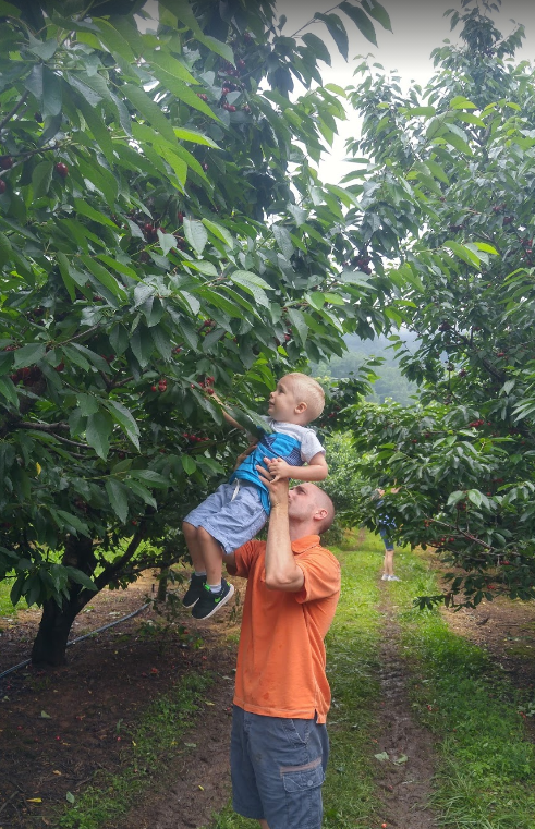 Dad helping son reach cherry tree at Spring Valley Orchard