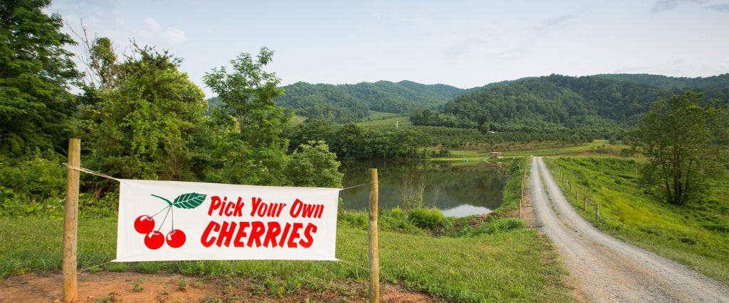 Pick your own cherries in Virginia