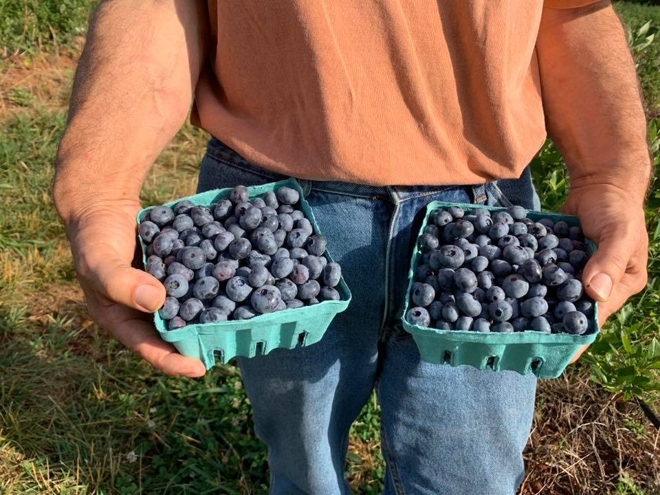 Person holding two cartons of blueberries at Chiles Peach Orchard