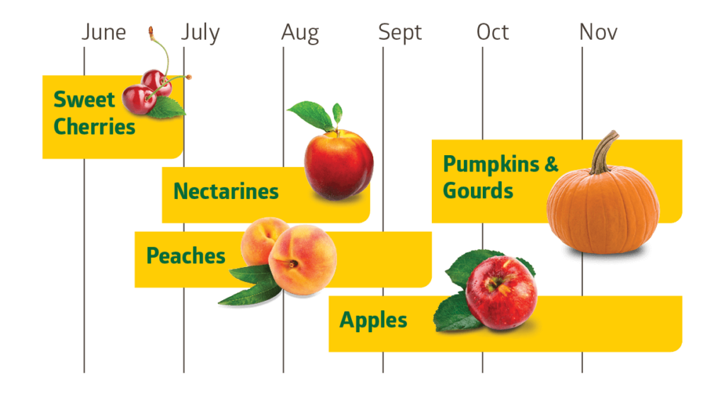 Pre-picked fruit available at Carter Mountain Orchard