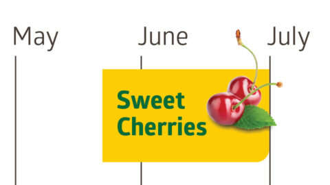 Sweet cherries are generally ripe in June or late May until July.