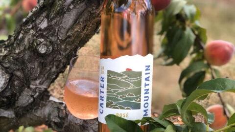 Carter Mountain Wine Rose 2020 in a peach tree